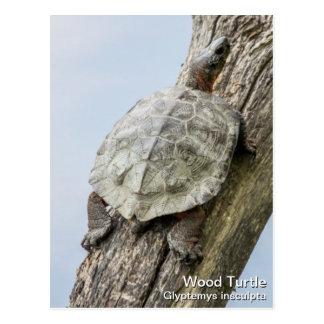 Tortuga de madera tarjeta postal