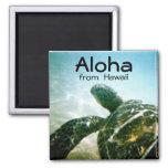 Tortuga de mar de Hawaii de la hawaiana Imán Cuadrado