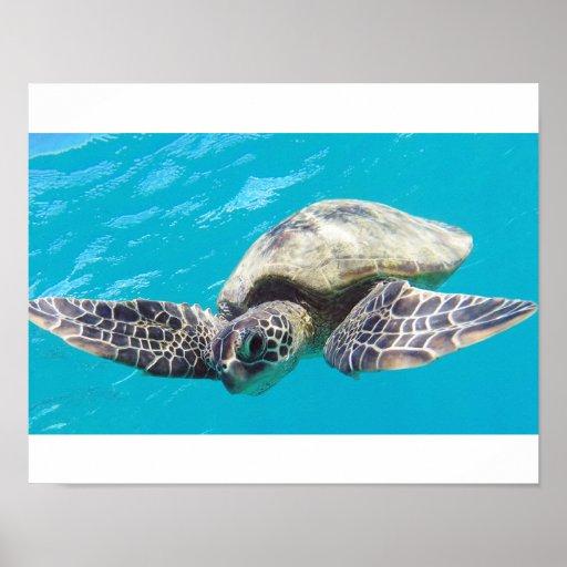 Tortuga de mar de Hawaii Impresiones