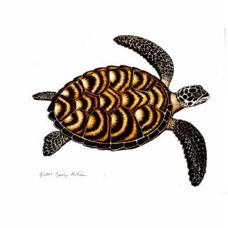 Tortuga de mar de Hawksbill Pin Fotoescultura