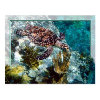 Tortuga de mar de Hawksbill, Islas Vírgenes de los Tarjeta Postal