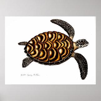 Tortuga de mar de Hawksbill Impresiones