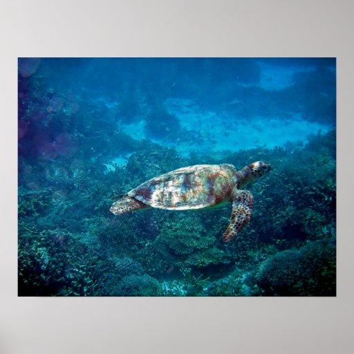 Tortuga de mar de la gran barrera de coral póster