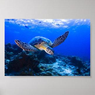 Tortuga de mar de la natación en agua azul poster