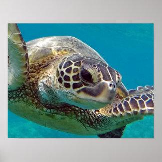 Tortuga de mar de las islas de Hawaii Póster