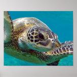 Tortuga de mar de las islas de Hawaii Posters