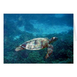 Tortuga de mar de señora Elliot Island Tarjeta De Felicitación