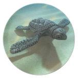 tortuga de mar del bebé 3d plato