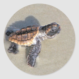 Tortuga de mar del bebé, apenas tramada pegatina redonda