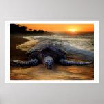 Tortuga de mar en el poster de la puesta del sol