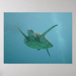 Tortuga de mar en hábitat natural poster