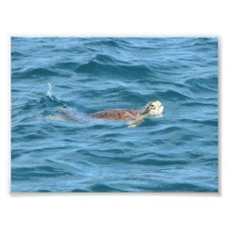 Tortuga de mar fotografía