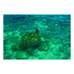 "Tortuga de mar hawaiana de Honu (36"" x 24"") Poster"