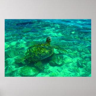 """Tortuga de mar hawaiana de Honu (36"""" x 24"""") Póster"""