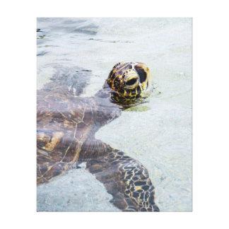 Tortuga de mar hawaiana de Honu - tortugas de Hawa Impresión En Lona Estirada