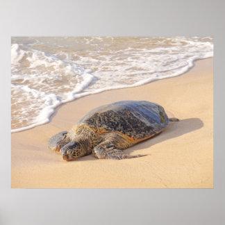 Tortuga de mar hawaiana póster