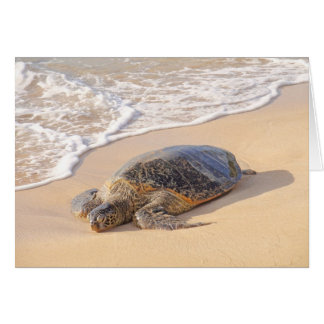 Tortuga de mar hawaiana felicitacion