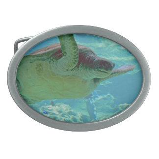Tortuga de mar hebilla cinturón oval