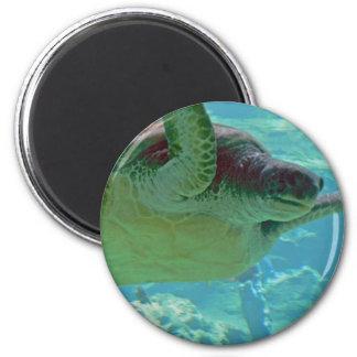 Tortuga de mar imán redondo 5 cm