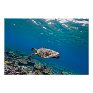 Tortuga de mar poster
