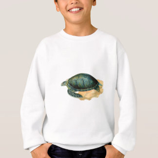 Tortuga de mar playera