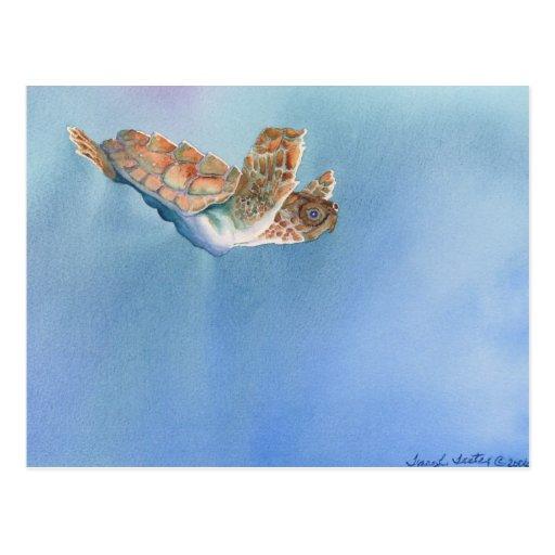 tortuga de mar postal