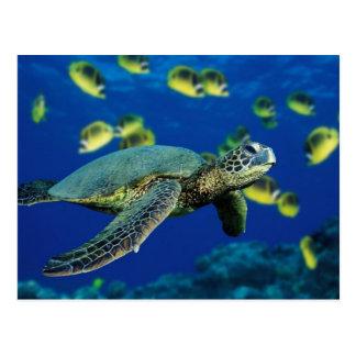 Tortuga de mar postales