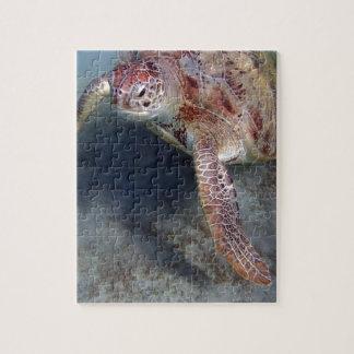 tortuga de mar puzzle