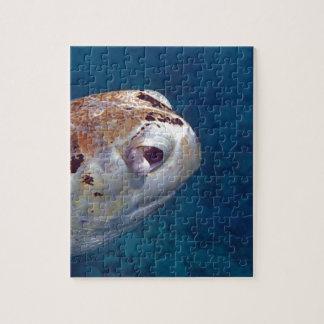 tortuga de mar puzzles