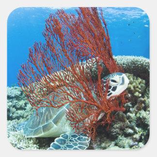 Tortuga de mar que descansa bajo el agua 2 calcomanía cuadrada