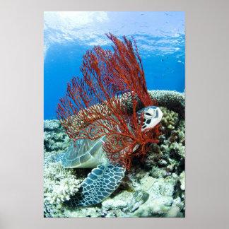 Tortuga de mar que descansa bajo el agua póster