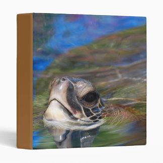 Tortuga de mar que empuja la cabeza encima de la c