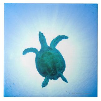 Tortuga de mar que nada bajo el agua azulejo cuadrado grande