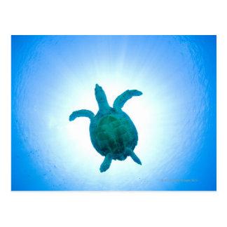 Tortuga de mar que nada bajo el agua tarjeta postal