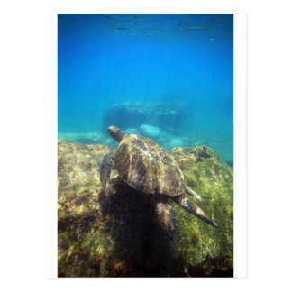 Tortuga de mar que nada la laguna subacuática del  postal