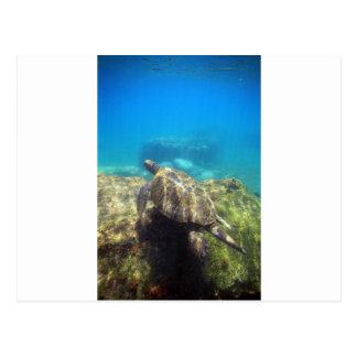 Tortuga de mar que nada la laguna subacuática del  tarjeta postal