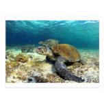 Tortuga de mar que se relaja bajo el agua en postal
