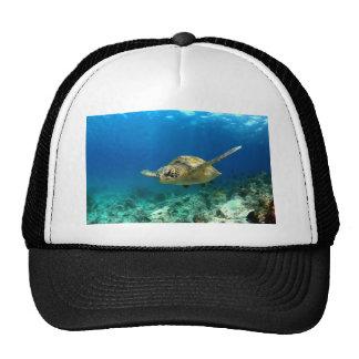 Tortuga de mar subacuática gorra