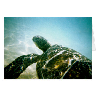 Tortuga de mar tarjetón
