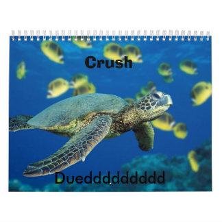 Tortuga de mar verde, agolpamiento, Dueddddddddd Calendarios