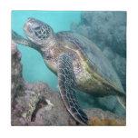 Tortuga de mar verde de Hawaii Azulejos
