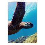 Tortuga de mar verde de Hawaii Felicitaciones