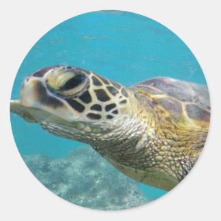 Tortuga de mar verde de Hawaii Pegatina Redonda