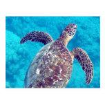 Tortuga de mar verde de Hawaii Postal