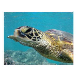 Tortuga de mar verde de Hawaii Postales