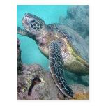 Tortuga de mar verde de Hawaii Tarjeta Postal