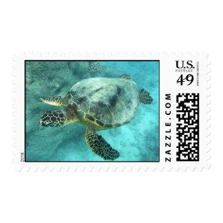 Tortuga de mar verde de Hawaii Timbre Postal