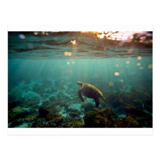 Tortuga de mar verde de la laguna de las Islas Gal Postal
