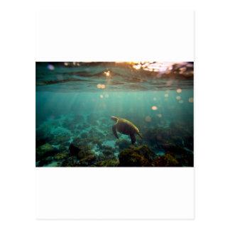 Tortuga de mar verde de la laguna de las Islas Gal Tarjeta Postal
