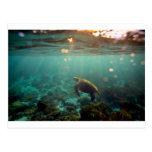 Tortuga de mar verde de la laguna de las Islas Postal